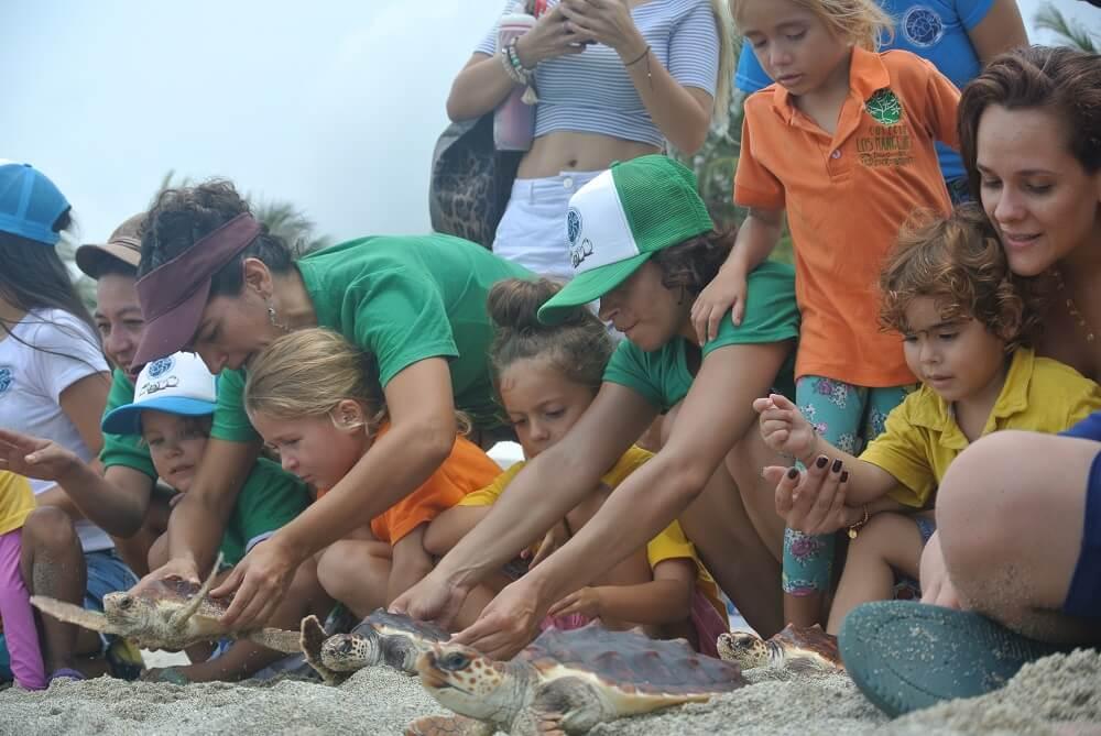 con tortugas – colegio los Manglares